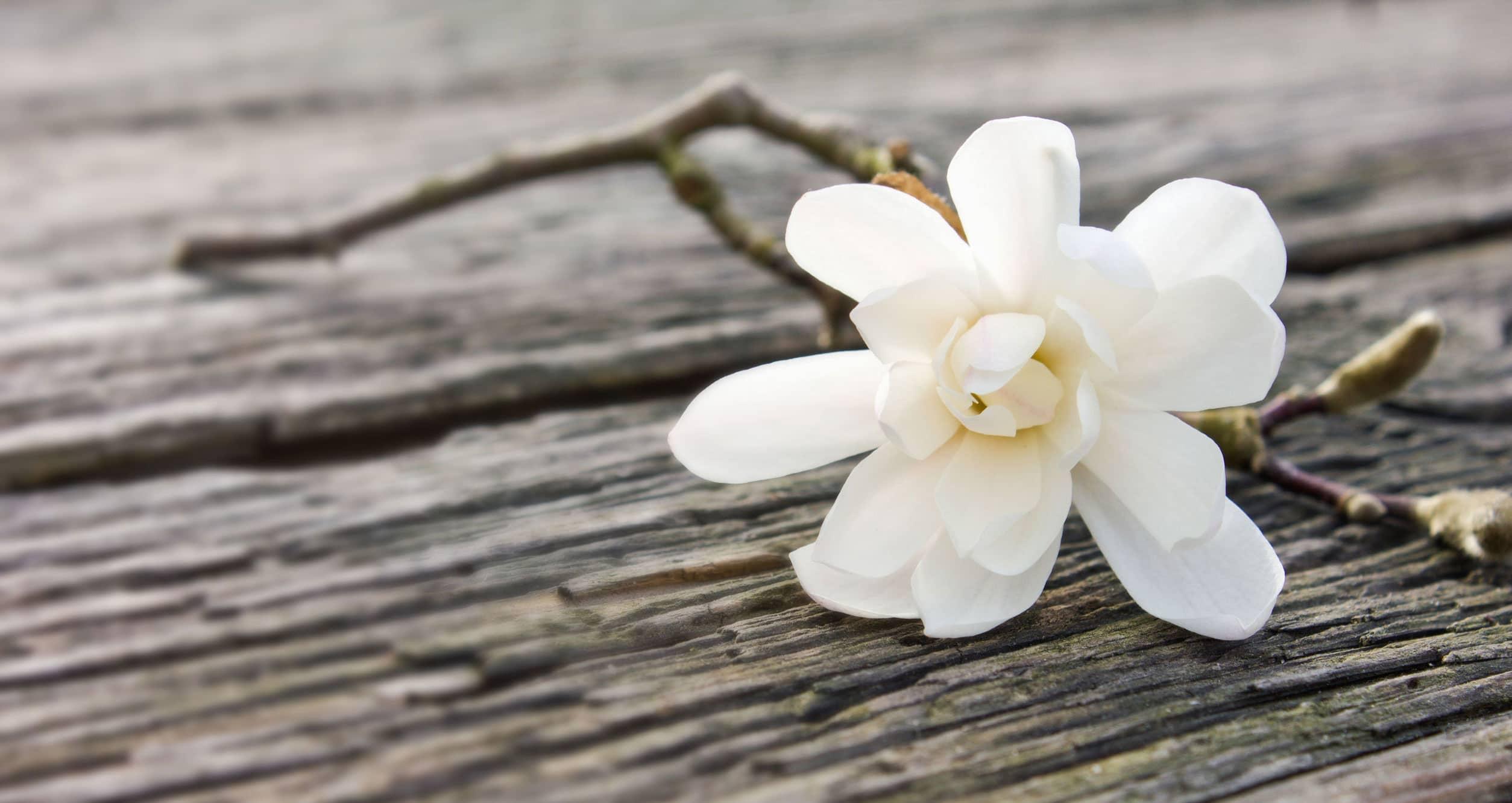 Witte bloemen bij overlijden